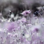 Wildblumenwiese, die Natur in großer Formenpracht. Trauer, Gedenken, Erinnerung, Natur, Blumen, Wildblumen, Pastell, Pflanzen, Banner.