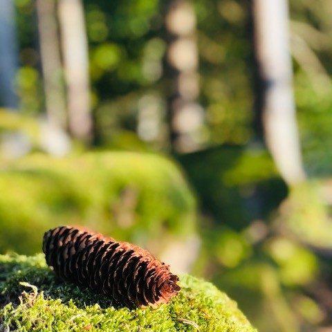 Foto Wald